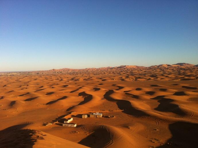 sahara desert plants - 690×515