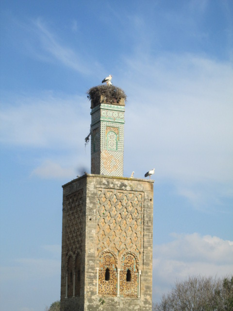 I never thought I'd see a stork on top of a minaret.  The team and I visited  beautiful ancient ruins called Chellah in Rabat. It might as well be called Stork Land with all the storks in this place!